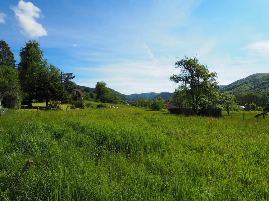 Secteur Giromagny – terrain de 1294 m2 à vendre vue nature